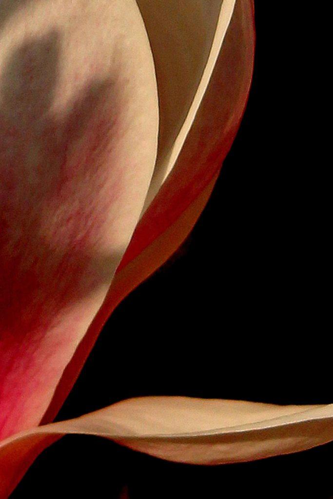 Frame.de.galerie - F4 - Heleen van Tilburg